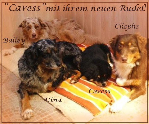 Caress-neues-zuhause